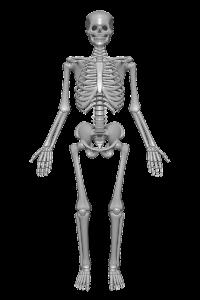 human-skeleton-1158318_960_720